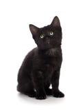 在白色背景隔绝的逗人喜爱的黑小猫 免版税图库摄影