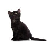 在白色背景隔绝的逗人喜爱的黑小猫 免版税库存图片
