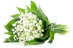 在白色背景隔绝的铃兰花束 库存图片