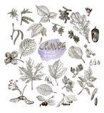 在白色背景隔绝的高度详细的手拉的叶子、果子和开花的汇集 库存照片