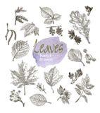 在白色背景隔绝的高度详细的手拉的叶子和开花的汇集 免版税库存图片