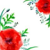 在白色背景隔绝的鸦片红色花水彩例证,装饰框架,手拉的艺术性的传染媒介 库存图片