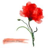 在白色背景隔绝的鸦片红色花水彩例证,设计的手拉的艺术性的传染媒介绘画 图库摄影