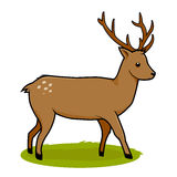 在白色背景隔绝的鹿 免版税库存照片