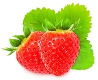 在白色背景隔绝的水多的红色stravberries 库存照片