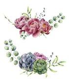 在白色背景隔绝的水彩花卉构成 葡萄酒样式诗句设置了与玉树分支,多汁植物 库存例证