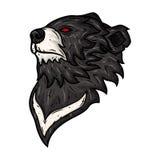 在白色背景隔绝的黑熊头 免版税库存图片
