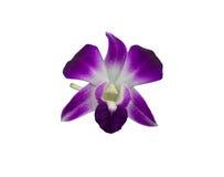 在白色背景隔绝的紫色兰花花束  免版税图库摄影