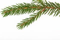 在白色背景隔绝的绿色冷杉枝杈 文本的空间 免版税库存照片
