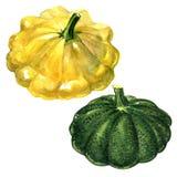 在白色背景隔绝的黄色和绿色小馅饼平底锅南瓜 库存例证