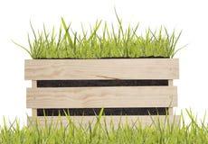 在木箱的绿草 库存照片