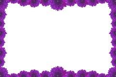 在白色背景隔绝的紫色花画框 免版税库存照片
