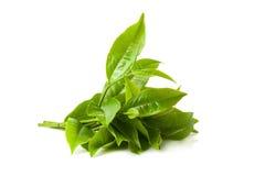 在白色背景隔绝的绿色茶叶 图库摄影