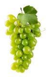 在白色背景隔绝的绿色葡萄 库存照片