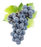 在白色背景隔绝的紫色葡萄 库存照片