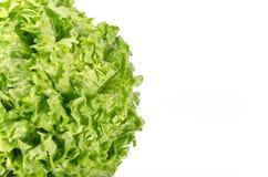春天绿色在一白色backg隔绝的莴苣叶子纹理  免版税库存照片