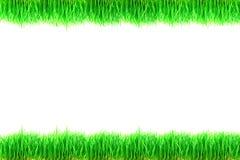 在白色背景隔绝的绿草植物 库存图片