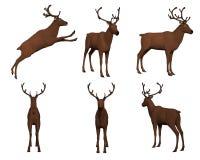 在白色背景集合3d隔绝的驯鹿 免版税库存图片
