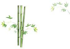 在白色背景,传染媒介例证的竹绿色竹子 库存照片