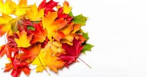 在白色背景,平的位置的秋叶 五颜六色的Ma堆  图库摄影