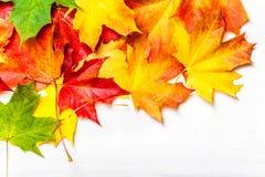在白色背景,平的位置的秋叶 红色堆,黄色 免版税库存图片