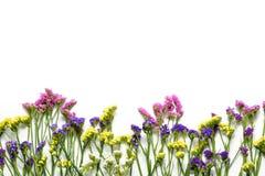 在白色背景,底下边界的Colorfull野花 平的位置,顶视图 免版税库存照片
