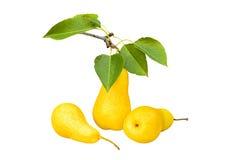 在白色背景,特写镜头的三个黄色梨 免版税库存图片