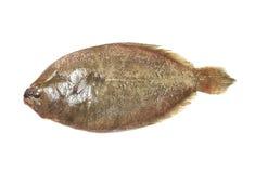 在白色背景(比目鱼鱼)隔绝的印地安Psetta最大值 库存照片