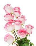 开花在白色从玫瑰的花束隔绝的 库存图片