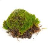 在白色背景绿色青苔隔绝的丛 免版税库存图片