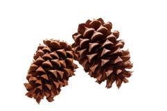 在白色背景-隔绝的杉木锥体 从常青树的自然棕色pinecones 库存图片
