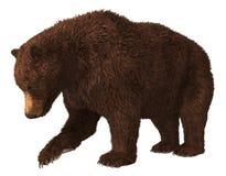 在白色背景3d例证隔绝的北美灰熊 向量例证