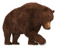 在白色背景3d例证隔绝的北美灰熊 库存例证