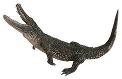在白色背景3d例证隔绝的鳄鱼 向量例证