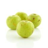 在白色背景isoled的印地安鹅莓 免版税库存图片