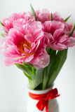 在白色花瓶的桃红色郁金香 库存照片