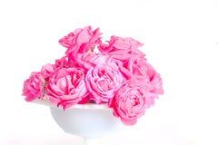 在白色花瓶的玫瑰 库存照片