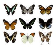 在白色蝴蝶隔绝的套 免版税库存照片