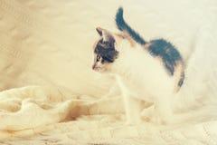 在白色被编织的毯子的五颜六色的小的小猫 库存图片