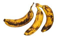 在白色被隔绝的背景的腐烂的香蕉 免版税图库摄影