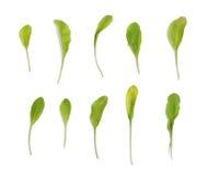 在白色设置的芝麻菜叶子 免版税库存照片