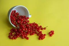 在白色说谎的红色甜无核小葡萄干在黄色背景的一个旁边杯子 图库摄影