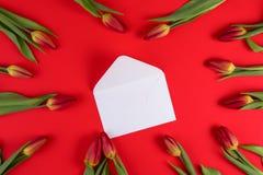 在白色附近的美丽的郁金香打开在红色背景的信封 免版税库存图片