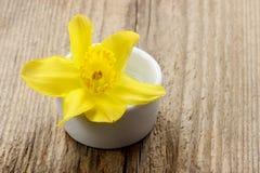 在白色陶瓷罐的唯一黄水仙花 图库摄影