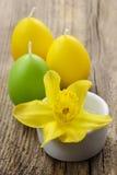 在白色陶瓷罐的唯一黄水仙花 库存照片