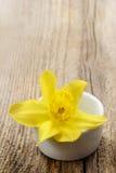 在白色陶瓷罐的唯一黄水仙花 库存图片