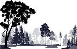 在白色隔绝的冷杉木灰色森林 库存图片