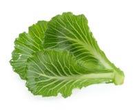 在白色隔绝的圆白菜叶子 免版税库存照片