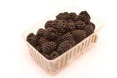 在白色隔绝的塑料碗的黑莓果子 库存图片