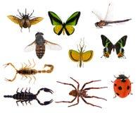 在白色隔绝的套十只昆虫 库存照片